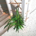 Marijampolė, 2019 m. Įrengti šviesūs laiptai individualaus namo vidaus laiptinėje.